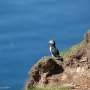 Puffin at Hermaness, on the island of Unst